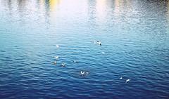 Prague | Czech Republic (C H) Tags: city color colour reflection bird colors birds river mirror republic colours czech prague prag praha czechrepublic bohemia vltava republika vltavariver tschechisch esko eskarepublika eska