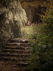 "secret garden • <a style=""font-size:0.8em;"" href=""http://www.flickr.com/photos/44919156@N00/14010226559/"" target=""_blank"">View on Flickr</a>"