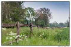 Spring is my love (RobieG) Tags: wiese berge zaun ruhrgebiet hamm frhling weetfeld wiescherhfen