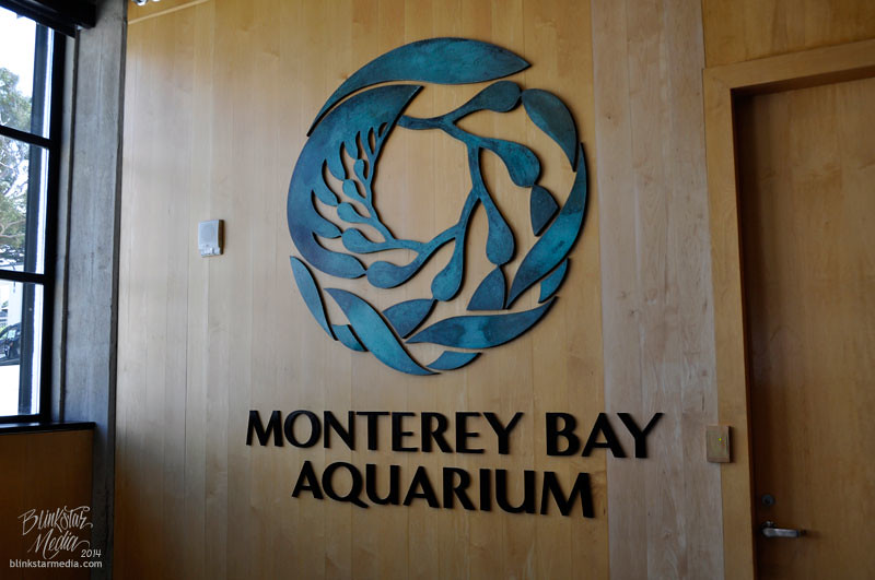 photograph about Monterey Bay Aquarium Printable Coupon identify Discount coupons for monterey bay aquarium california / Virgin