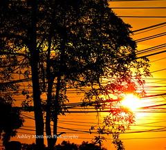 Sunset illuminates a tree and electric wires (Ashley Monteiro) Tags: sunset tree wires illuminates wwwpathfinderstravelworldcom wwwpathfinderstravel wwwashleythenomadcom