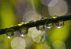 Water and light (MaiGoede) Tags: sunlight macro nature canon flora natureza waterdrops wassertropfen winterstimmung naturfoto awinterday flickraward flickraward5 cmatthiasihriggoede