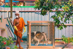 Monk Washing Dogs (Pauls-Pictures) Tags: street city people urban color colour dogs temple photography mask buddha candid streetphotography monk buddhism georgetown holy malaysia temples sacred mon karma penang enlightenment washing sights streetphotos streetpics streetphotograhy streetpictures