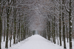 Winter Road (Stonebridge65) Tags: road wood trees winter white snow forest nikon diepenveen ruby10 ruby15 ruby20 rubyfrontpage