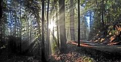 (viton_I) Tags: california sun forest landscape panoramas losgatos