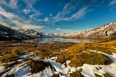 Loch Arklet (GenerationX) Tags: winter tree ice landscape scotland unitedkingdom scottish neil icy trossachs lochlomond barr arrocharalps benvorlich benvane inveruglas beinnnarnain stronachlachar inversnaid locharklet beinnime snowgrass