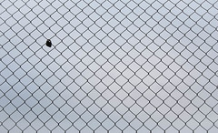 Day 7 (JohannesLundberg) Tags: love fence europe pattern stockholm location locker repeated project365 diamondpattern bromsten 365photos chainlinkfencing 2structuresandarchitectures