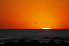 Ocean Sunset (blachswan) Tags: sunset sun australia victoria portfairy oceansunset