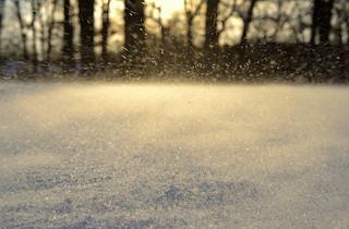 untamed snow