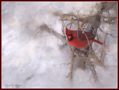 Maybe Winter won't last forever after all (edenseekr) Tags: cardinal snowy wabisabi photopainting nywinter