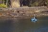 Kayaking at The Royal National Park 1 (everyday sh⊙_☉ter) Tags: park beach forest sydney waterfalls kookaburra wattamolla garie royalnationalpark audley stanwell hackerriver