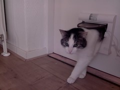 20160503-135233-i-1 (Catflap central) Tags: camera pet cats cat pi raspberry meow catdoor catflap kattenluik katzenklappe catflapj2nnl