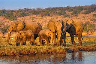 Family, Chobe National Park, Botswana
