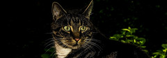 Digga (maaxlart) Tags: cat spring katze grn kater frhling