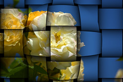 The Bulge (swong95765) Tags: roses sky art yellow ribbon woven weave bulge bulg