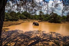 haven called yala (sivagajan) Tags: elephant wildlife srilanka 24105l yalanationalpark canon6d