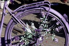 Festa dei Fiori, Navigli. Lilac bike (Ondeia) Tags: flowers milan primavera spring day milano sunday sunny lilac bici fiori fiore flo navigli lilla bicicletta particolari particolare milanese violetto