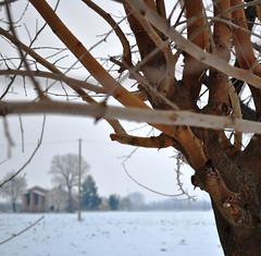 Gelso. (GiannLui) Tags: inverno freddo 2012 febbraio
