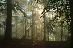 DSC_2351 ein traumhafter Morgen - a dreamlike morning (baerli08ww) Tags: mist colors forest germany deutschland spring nebel wald farben frühling morningsun rheinlandpfalz morgensonne westerwald malberg rhinelandpalatinate westerforest malhill