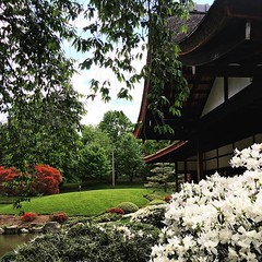philadelphia #fairmount #shofuso #japanesehouse #teahouse #flowers... (someguyinphilly) Tags: flowers philadelphia beautiful spring fairmount teahouse japanesehouse shofuso uploaded:by=flickstagram instagram:venuename=shofusojapanesehouse26garden instagram:venue=1026287426 instagram:photo=1250940953973589349186691376
