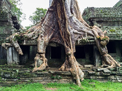 Tree growing out of the ruins. (Evgeny Ermakov) Tags: old travel vacation building tree green tourism monument nature beautiful beauty stone architecture asian religious temple ancient rainforest ruins asia cambodia southeastasia khmer outdoor stones antique buddha buddhist traditional famous religion ruin roots culture buddhism landmark scene unescoworldheritagesite unesco holy exotic jungle siem reap destination kh southeast typical root siemreap angkor taprohm touristic buddhistic krongsiemreap