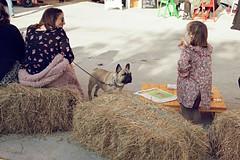 Mercazoco Diciembre Gijón Feria de Muestras 3 Aniversario mascotas