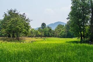 angkor - cambodge 2016 80