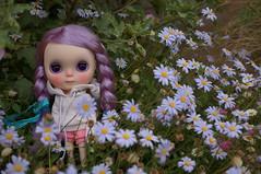 Ginny in the Felicia bush