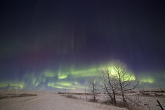 too bad about the moonlight (John Andersen (JPAndersen images)) Tags: trees winter sky snow field night fence alberta aurora northernlights stubble