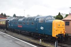 55 019 Royal Highland Fusilier (Midland Red FanBoy) Tags: travel england train trains transportation severnvalleyrailway kidderminster passengertrains severnvalleyrailwayspringdieselgala
