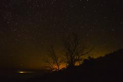 DSC_0171b-1 (Pisniz) Tags: nikon estrellas nocturna polar atalaya ciudadreal startrails startrail largaexposicin circumpolar d3200 laatalaya
