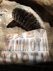 Inner Space Cavern bones (pr0digie) Tags: iceage tooth underground fossil texas teeth georgetown caves mammoth bones limestone cave karst cavern sinkholes innerspace formations