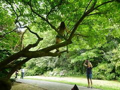 girl up a tree (helenoftheways) Tags: people candid trees kelseypark beckenham london uk green path branches snappersnapped