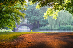 untitled (n.highholder) Tags: trees light green landscape gold citypark 135mm sonya7 cy135mmf28