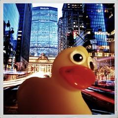 NY concrete jungle where dreams are made off   (Angelo Trapani) Tags: ny duck viaggio papero ducktales avventura