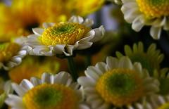 Flora (ClaDae) Tags: flowers plant flower nature colors composition flora outdoor natur compo goodcomposition