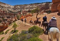 Horse ride at Bryce 06 (Dave Bezaire) Tags: utah unitedstatesofamerica brycecanyon slandscape sanimal vedit sperson label~ rating3~ csouthwest