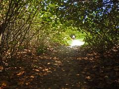 Tnel Natural (viviana.alemn) Tags: naturaleza nature landscape photography selva tayrona tunel