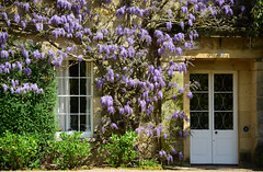 Hammerwood House - Sussex (Mark Wordy) Tags: westsussex wisteria ngs nationalgardensscheme georgianhouse opengarden iping hammerwoodhouse