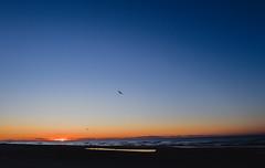 wavelengths (nardell) Tags: ocean sea beach nature sunrise fly newjersey seagull flight shore jerseyshore avalon putabirdonit