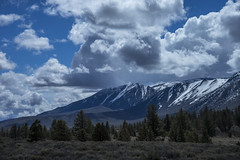 Storm Clearing (shaunezell) Tags: sky mountain storm mountains tree clouds landscape afternoon sony mammoth blueskies sierranevada mountainrange sonya7