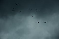 Silhouettes (Samuel Raison) Tags: nature montagne nikon vercors hautsplateauxduvercors nikond2xs nikond3 nikon41635mmafsgvr nikon4200400mmafsgvr