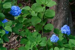 30Yamada Pond Park (anglo10) Tags: flower japan