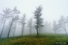rboles y niebla (Mimadeo) Tags: morning trees light mist nature wet misty fog mystery forest landscape leaf haze branch natural foggy bark mysterious trunk hazy