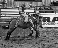 Bronc Rider (Cindy Mulvihill) Tags: action western rodeo bronc