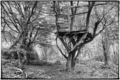 Day #3059 (cazphoto.co.uk) Tags: trees playground lumix wooden woods treehouse panasonic forgotten danbury project366 160516 dmcgh3 panasonic1235mmf28lumixgxvarioasphpowerois beyond2922 2016th32