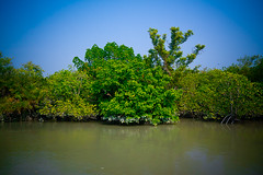 IMG_0748 (Subir Mukherjee Photography) Tags: sunderbanindiandelta mangroveforest royalbengaltiger rain forest