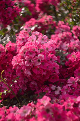 DSC_1762+ (SuzuKaze-photographie) Tags: flowers fleurs nikon lyon bokeh f2 parc swirly helios 442 helios442 d7100 suzukazephotographie