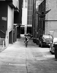 Messenger (Brian Legate) Tags: bw black white blackandwhite street city urban citylife downtown streetphotography seattle washington seattlewashington pikeplace pike