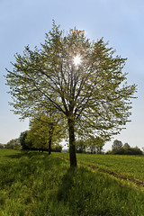 Backlight (L I C H T B I L D E R) Tags: light sky tree field backlight germany licht spring feld himmel baum dorp frhling linde limetree mettmann durchlicht hinterlicht tiliaplatyphyllos sommerlinde